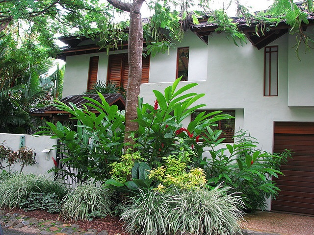 tropical landscaping in a front yard in port douglas far north queensland
