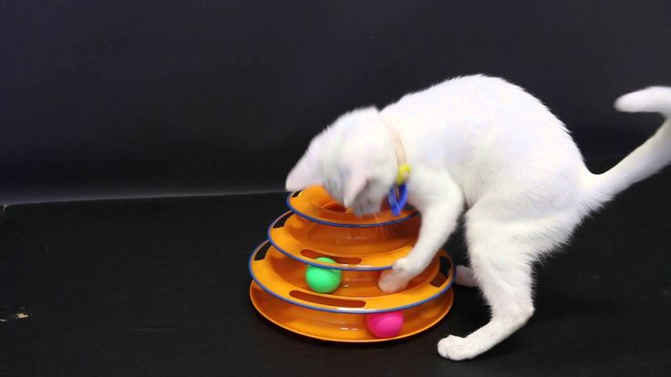 Cutie Kitten playing with Tower Of Tracks, Multi Level Cat Toy!
