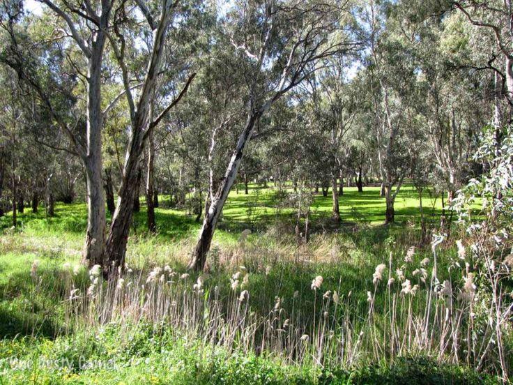 A walk along Linear Park imitates a more distant bushland