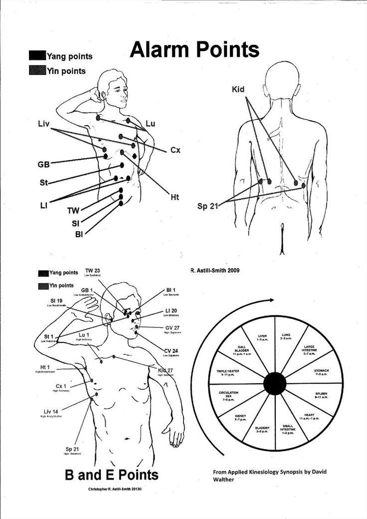 fd02bdb2efa75d791ec35ecc46149931 17 best images about massage on pinterest thai massage, body on jujuphysio template