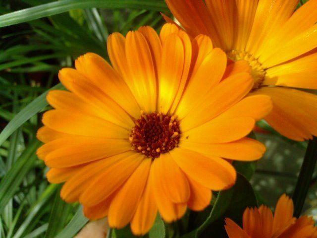 5 plante medicinale