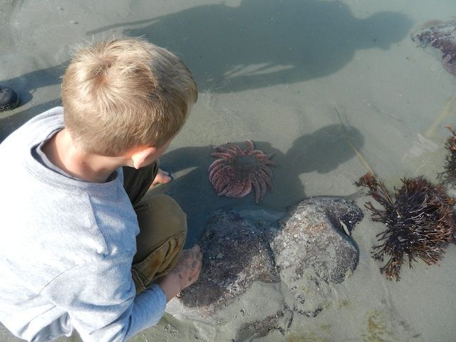 Where to find the best tide pools on Vancouver Island. Tide pooling is one of our most favorite activities! #sacralchakra #chakras