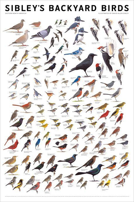 Bird Identification Chart #apartmenttherapy #birding #birdwatching