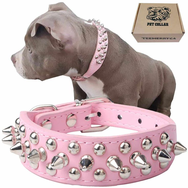 Adjustable leather spiked studded dog collar studded dog