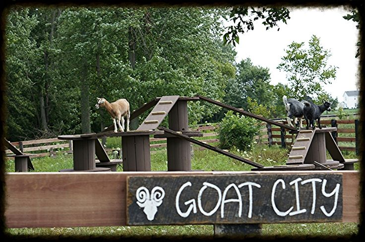 Watch and feed our friendly herd of goats as they play and frolic on their…