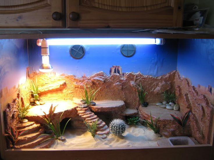Show us your set up's! - Page 7 - Reptile Forums