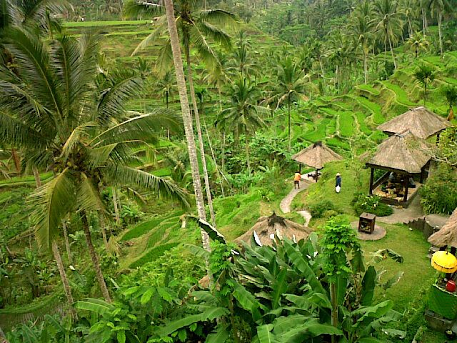 Alon Alon Terrace Cafe - Bali