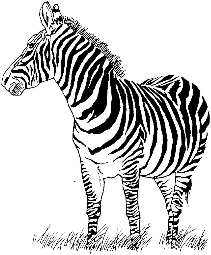 10 best coloring pages images on pinterest coloring for Zebra color page