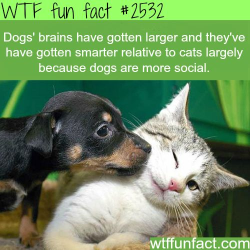 320 best images about Fun Facts on Pinterest | Operation ...