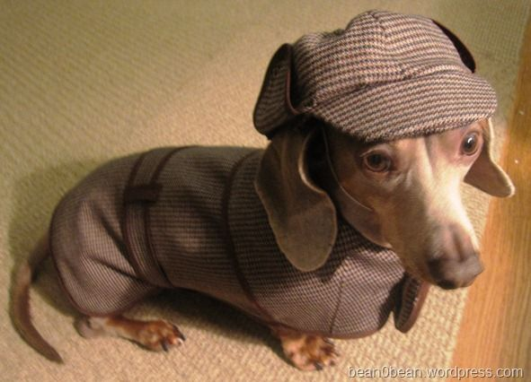 I don't usually like to dress my dachshunds but this one is adorable!!! Sherlock Holmes Dog Costume