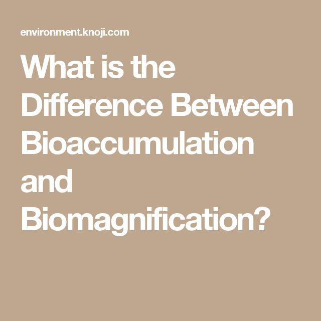 What is the Difference Between Bioaccumulation and Biomagnification?