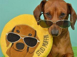 PrideBites Dog Toys | The Most Versatile Dog Toy Ever!