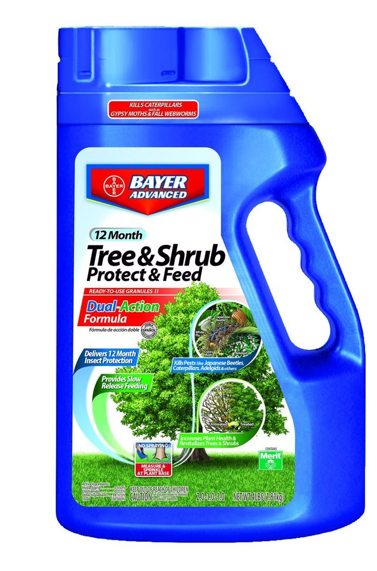 Bayer Advanced 701700 12 Month Tree and Shrub Protect and Feed Granules, 4-Pound *** Quickly view this special outdoor item, click the image : Camping supplies