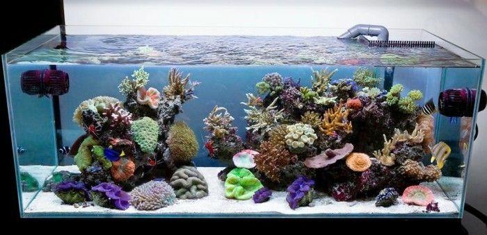 aquarium mit salzwasser meereswasser koralle exotische fischen weiser sand aquarium einrichten