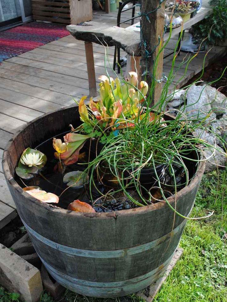 mini bassin décoratif en tonneau de bois avec des nénuphars et plantes en pots