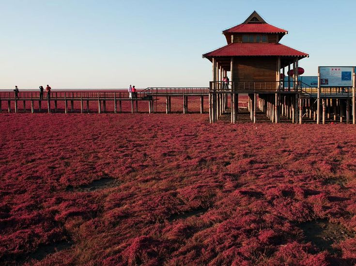Incredible Red Beach in Panjin, Natures Mesmerising Beauty