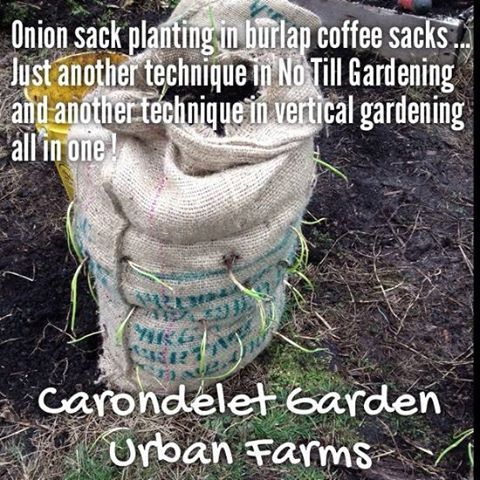 No-till gardening is a natural method of gardening that rejects mechanical means of horticulture, such as compacting, plowing, eroding and degrading the earth using tools and machines, in favor of less aggressive means that encourage soil fertility. http://www.naturalnews.com/040882_no-till_gardening_composting_home_garden.html