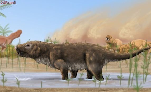 Precursores dos mamíferos: Fósseis 'escondidos' no RS levam à descoberta de 8 novas espécies