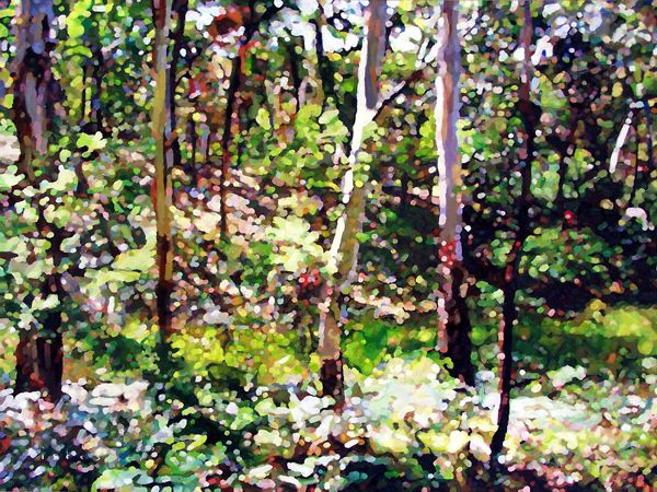'Neville Forest' by David Isbester. Limited Edition Print.