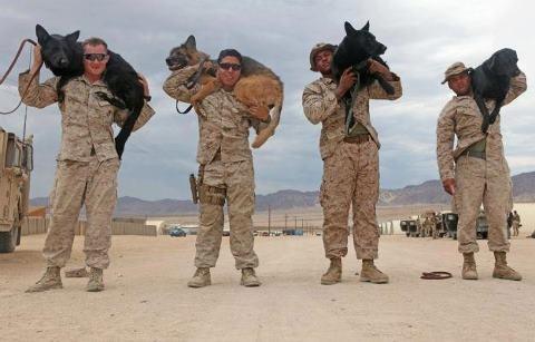 Marines and their dogs, 8 cuties I just wanna hug! Thank you, Marines!