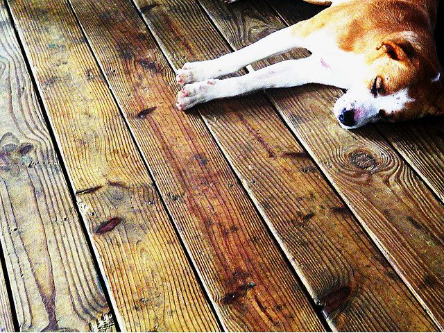 Pin by candleman floors on hardwood and hounds pinterest for Hardwood floors dog nails