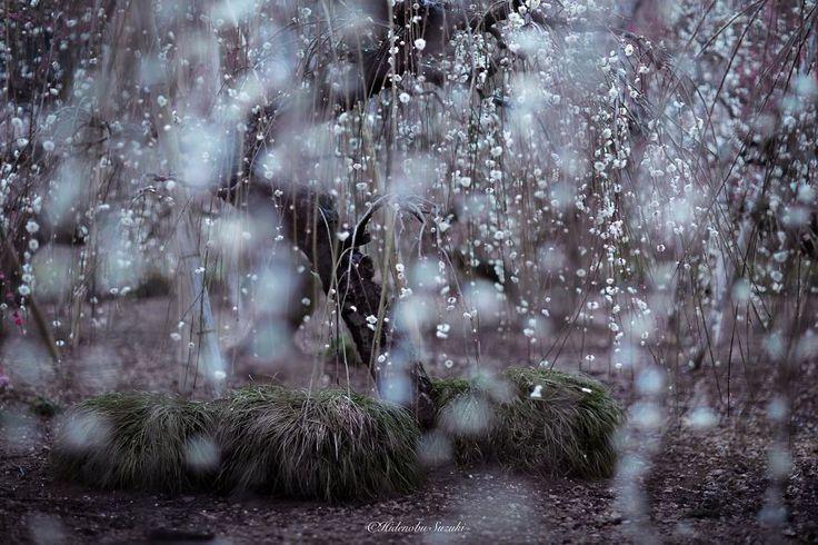 Le printemps au Japon par Hidenobu Suzuki  2Tout2Rien
