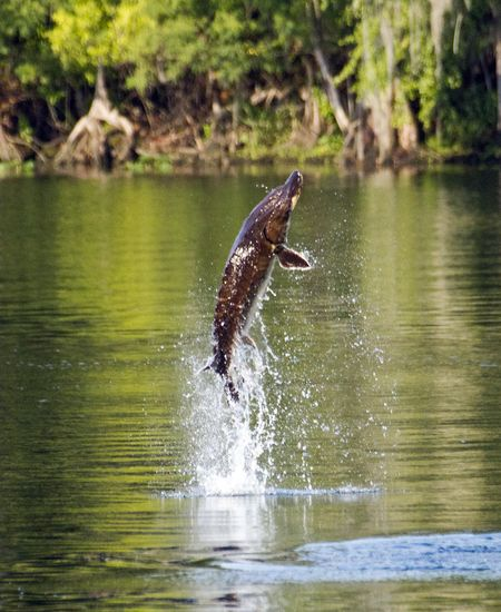Best National Parks in Florida | Manatee Springs State ...