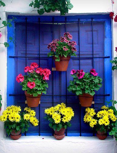 muitas flores!