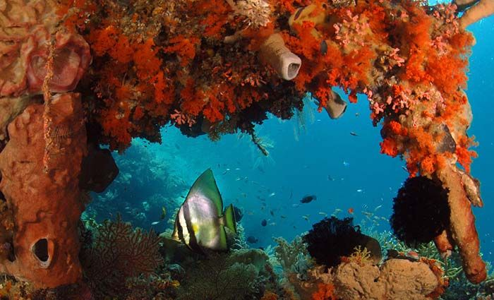 Wakatobi Photo Gallery from Wakatobi Dive Resort