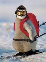 Résultats de recherche d'images pour «cute animal skiing»