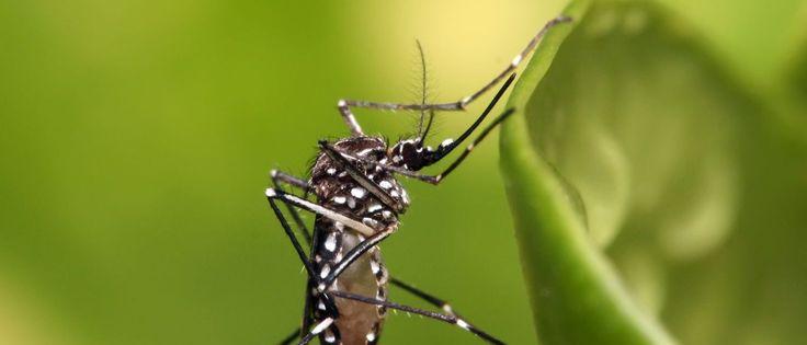 InfoNavWeb                       Informação, Notícias,Videos, Diversão, Games e Tecnologia.  : Chikungunya é o maior desafio de saúde pública em ...