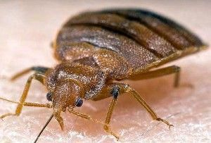 Don't Let the Bed Bugs Bite   how to travel more safely and