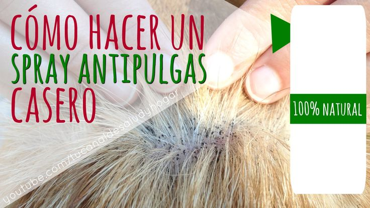 Spray Casero Antipulgas para Perros - YouTube