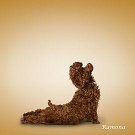 Upward Facing Dog in its literal sense :-)