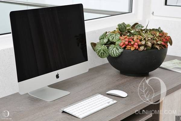 Оригинальная небольшая композиция из горшечных растений для украшения рабочего места. Низкое асимметричное матовое кашпо ручной работы.