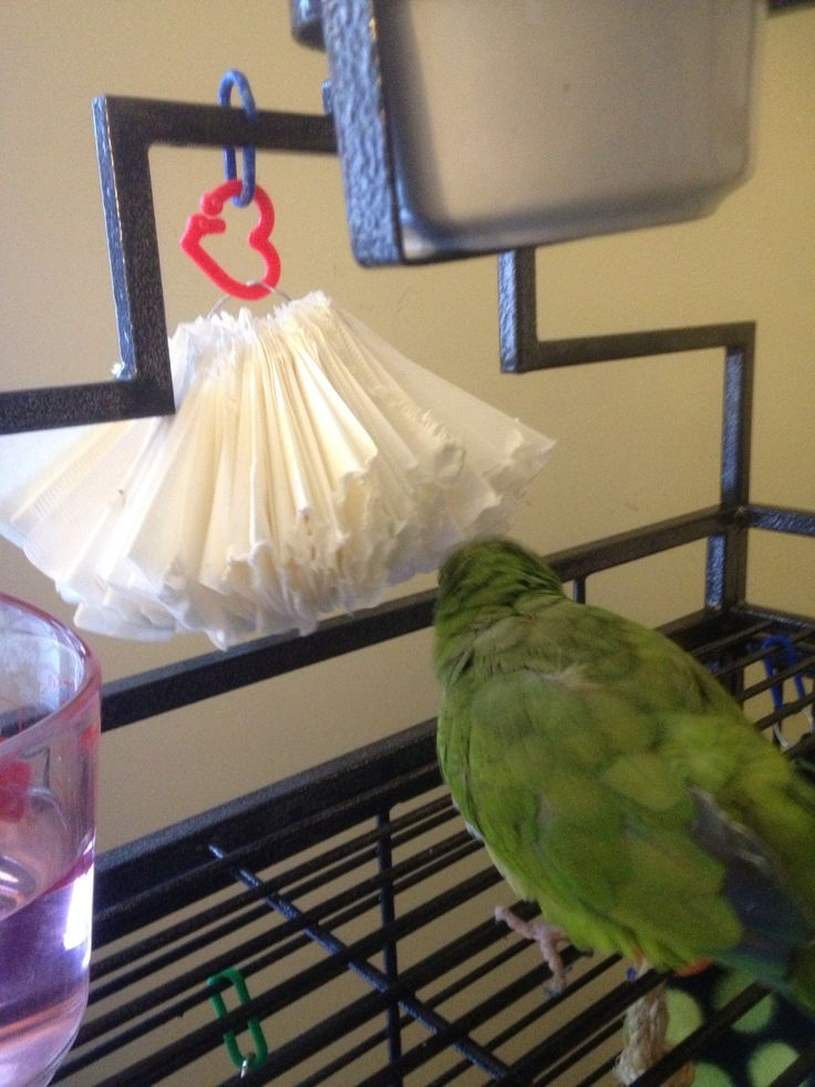♥ Pet Bird Stuff ♥ Shredding toy. Made from coffee filters.