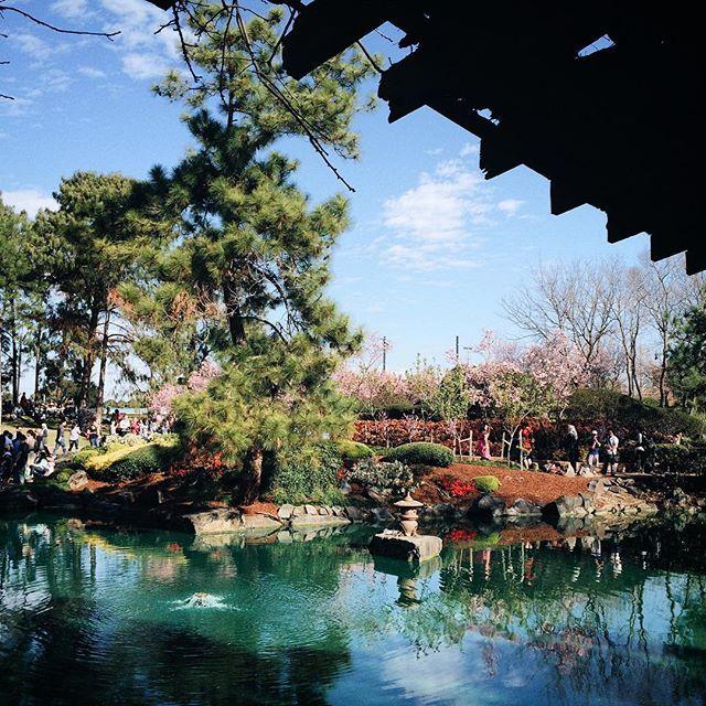 very nice japanese garden in auburn botanic gardens - so nice it reminds me of kanazawa and kenroku-en #japanesegarden #vscocam