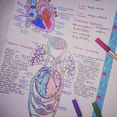 Resultado de imagem para resuminho tumblr sistema circulatorio