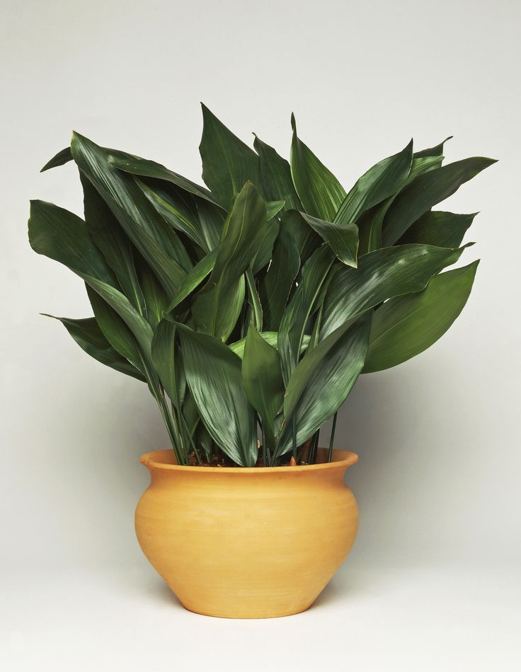 Potted Plants And The Necessary Spring Care: The Best Indoor House Plants And How To Buy Them