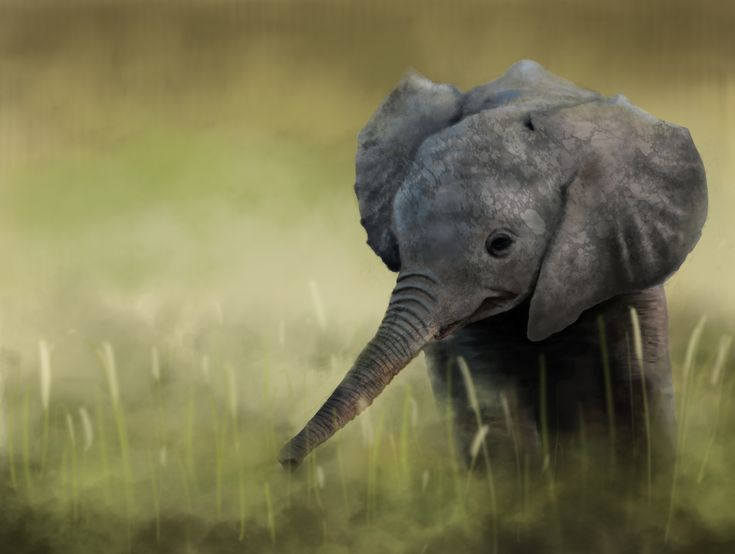 View, download, comment, and rate this 5000x3770 Elephant Wallpaper - Wallpaper Abyss