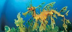 dragon-de-mar dragon-de-mar