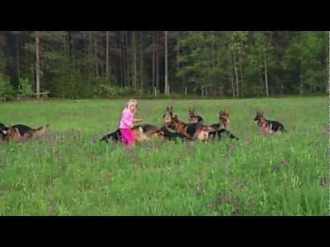 Little girl running with German Shepards. OMG. I smile so much. From Huff Post good news.