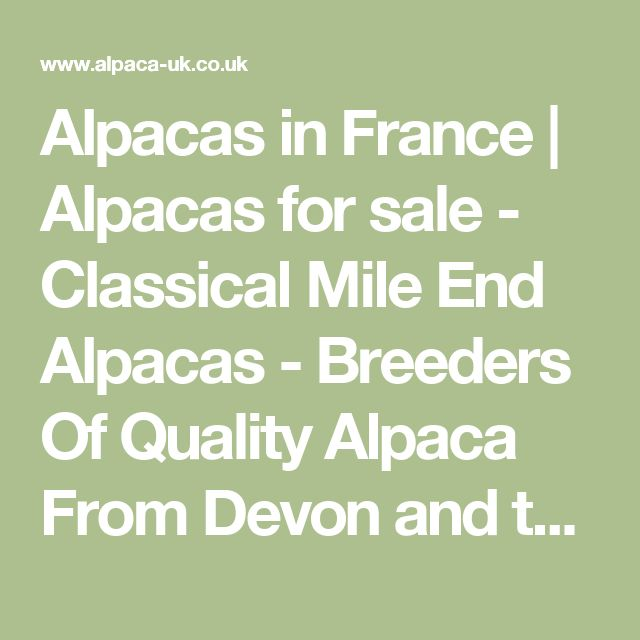 Alpacas in France | Alpacas for sale - Classical Mile End Alpacas - Breeders Of Quality Alpaca From Devon and the South West