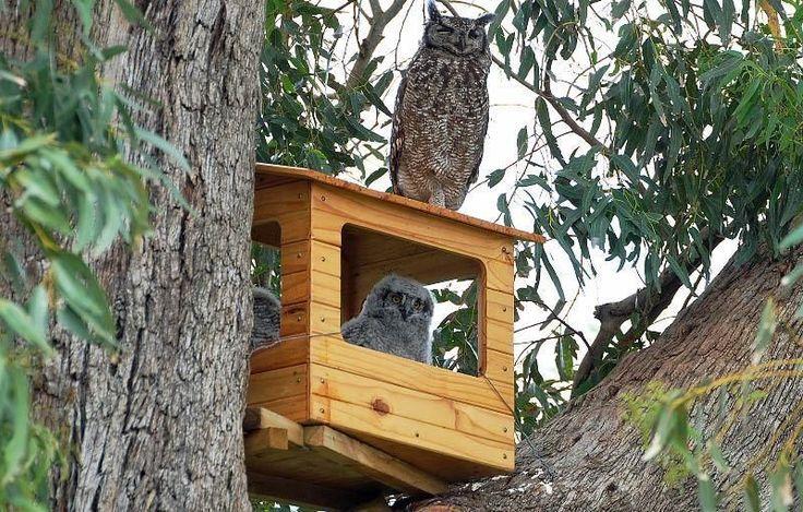 Best 25+ Owl nest box ideas on Pinterest | Owl box, Owl ...