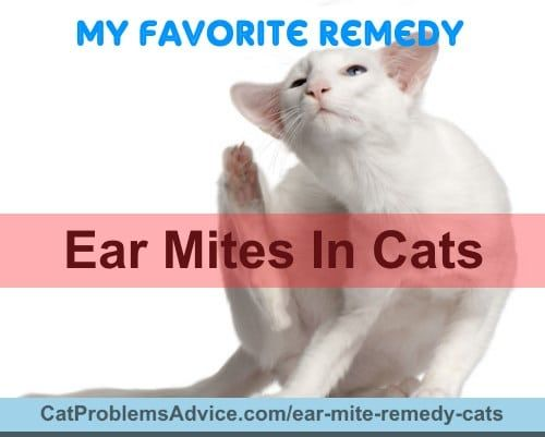 Natural Remedy To Clean Dog S Ears