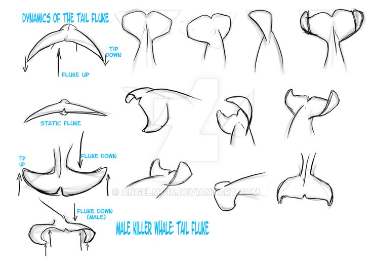 150 best Orca Whales images on Pinterest | Baleen whales, Collar ...