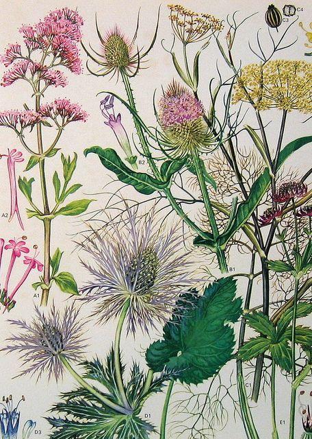 Imprimolandia: botánica                                                                                                                                                                                 Más