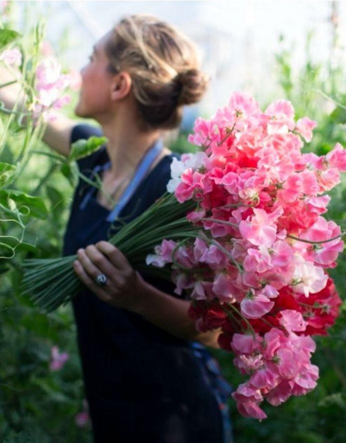 Pois-de-senteur géants - Pour le bouquet de la mariée