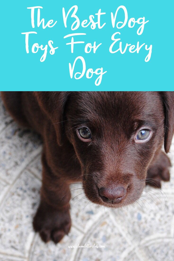 Shop Here For All Your Dog Toys Needs Fun And Interactive Toys
