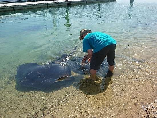 Phillip Island. feed pelicans. see giant stingrays. yesssssss.